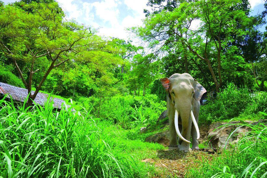 Thailand - Olifant in diervriendelijk park - 2-Daagse Jungletrekking en olifanten trainen Tour