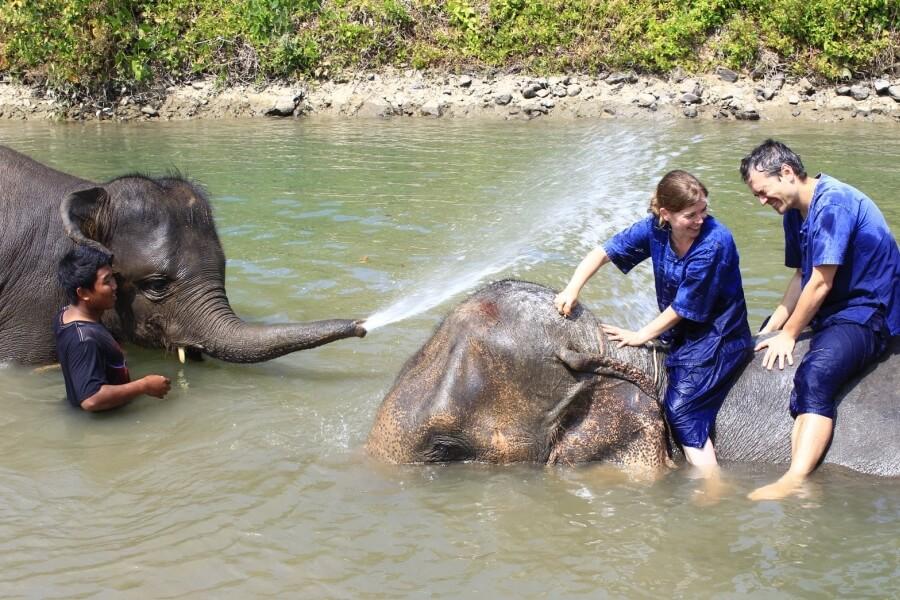 Thailand - Chiang Mai - Eco Elephant Care - 07
